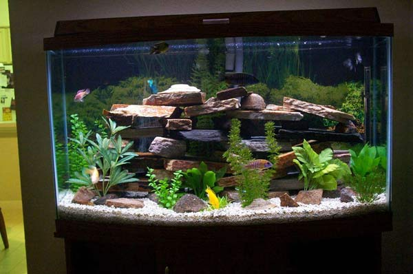 30 GALLON FISH TANK image galleries - imageKB.com